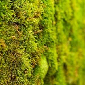 Jardín Vertical - Ixkin Berdea