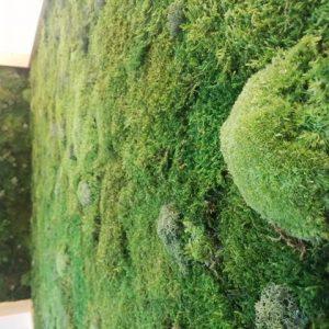 Tipo de musgos del Jardín Vertical de Vigo